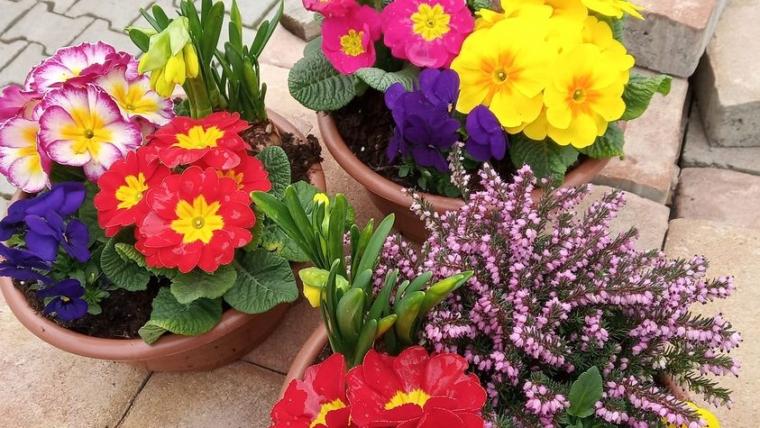 Jaro je v plném proudu